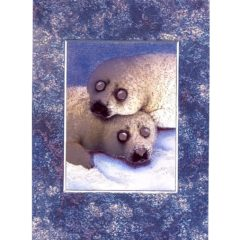 3697 Two Baby Seals