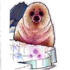 4117 Seal Pup