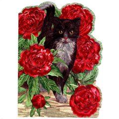 4139 Black & White Cat with Ballroses