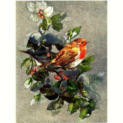 6547 Winter Robin