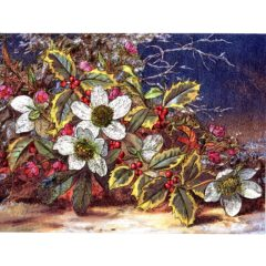 6630 Holly & Christmas Roses