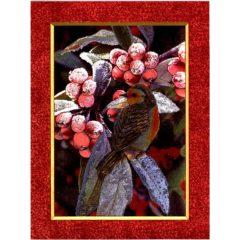 6652 Robin on Branch