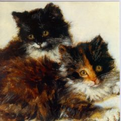 ESL23 Kittens – cats