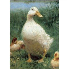 FA13 Ducks