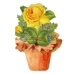 GE55 The Potted Rose