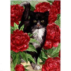 P1341 Black & White Cat