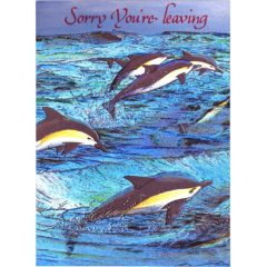 3448 Flying Dolphin – Sorry Youre' Leaving