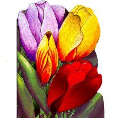 4090 Tulips