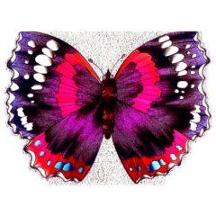 4096 Butterfly